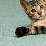 slider-kitten-on-rug-700×300