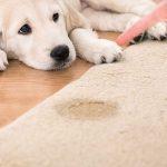 slider-puppy-stain-700×300